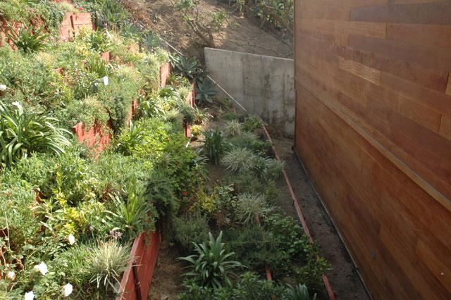 Front hillside